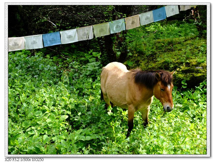 路邊有馬在休息了