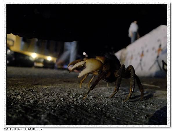 地上有螃蟹在跑,走路要小心