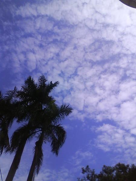 薄薄的雲+椰子樹