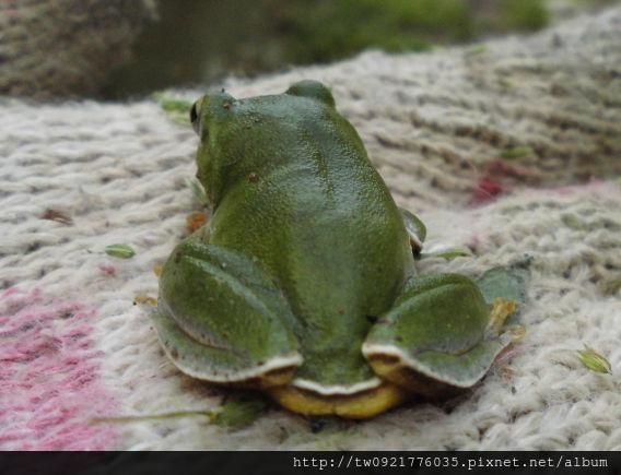 青蛙1.jpg