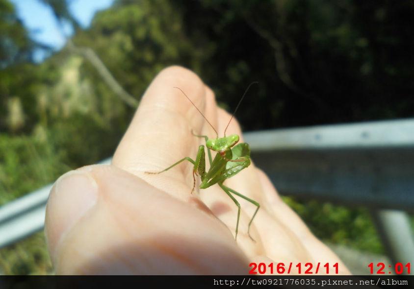 1 小螳螂.jpg