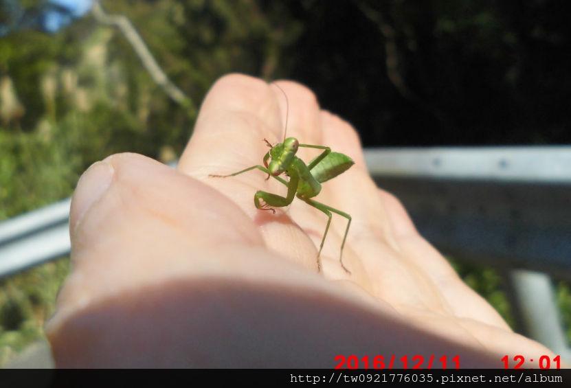 1 小螳螂2.jpg