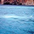 宜蘭民宿  三月三旅店  推薦宜蘭旅遊景點    龜山島賞鯨豚
