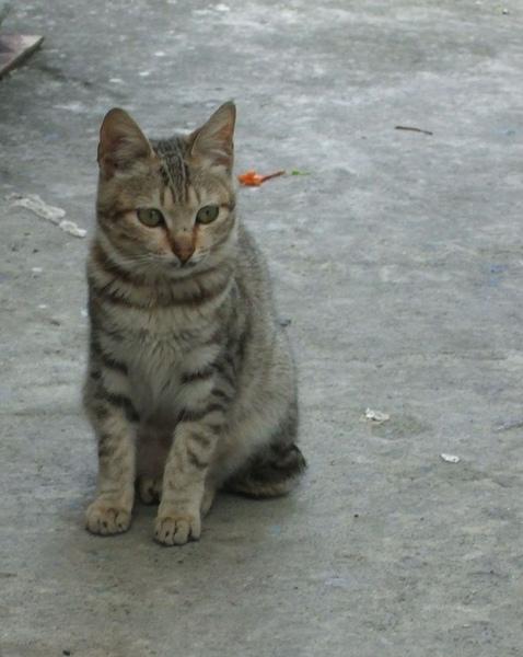 牠的兄弟貓