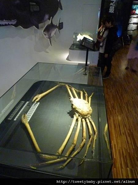 國立台灣博物館 057.JPG