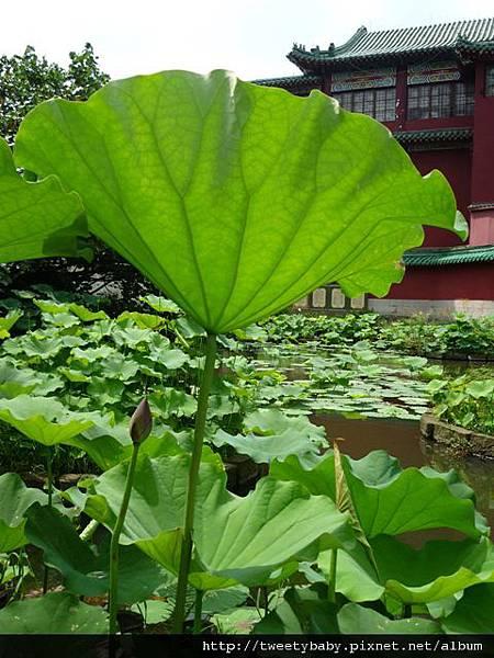 植物園隨意行 296.JPG