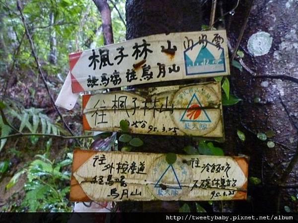 冷飯坑古道.冷飯坑山.楓子林山 057.JPG