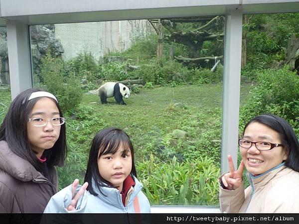 木柵動物園.動物園山 046