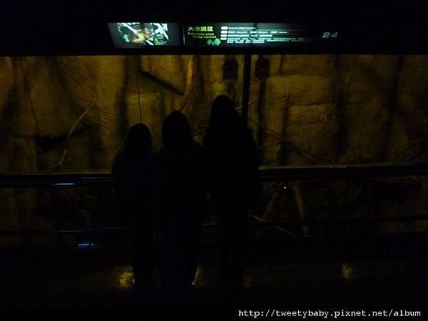 木柵動物園.動物園山 067