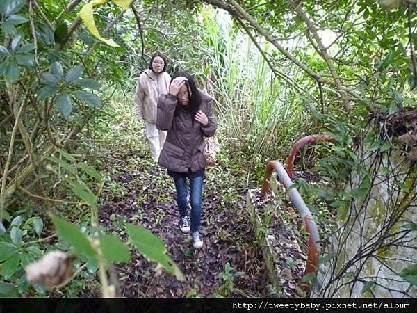 木柵動物園.動物園山 103