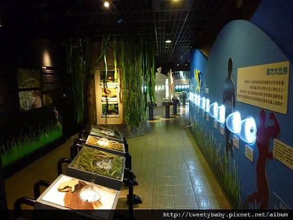 木柵動物園.動物園山 144