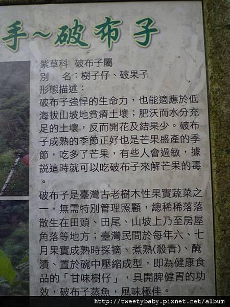 龍山洞市503基點.虎山自然步道.三清宮大葉雀榕 092