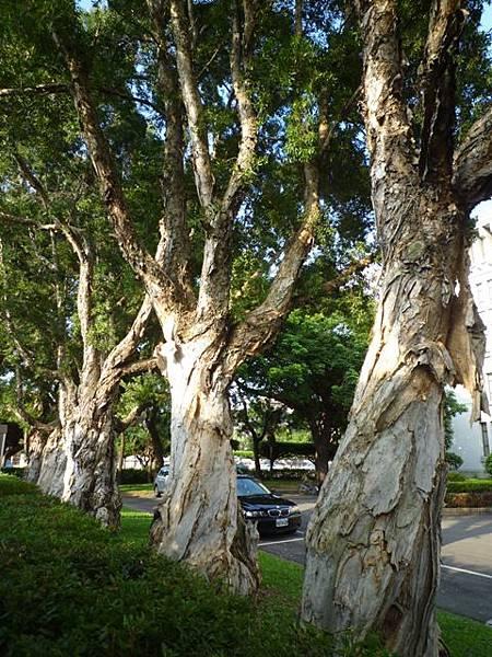 台北二二八紀念公園陸檢0007號一等水準點 004