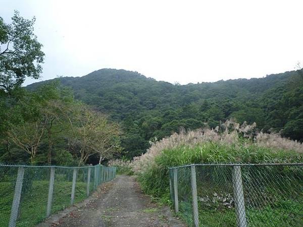 串空湖古道.九芎坑山 101