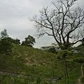台大賞杜鵑.芳蘭山 141