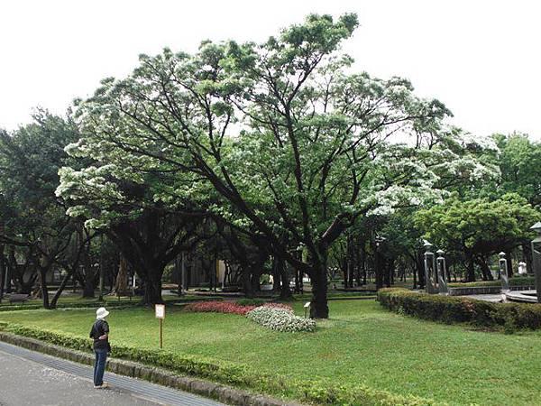 台北二二八公園流蘇.古蹟 077