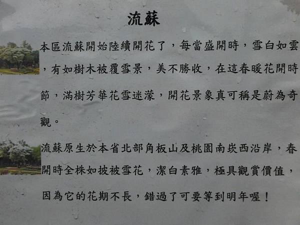 台北二二八公園流蘇.古蹟 078