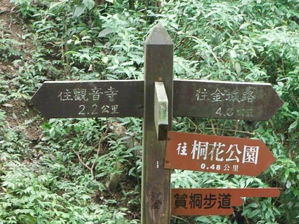 天上山賞桐巧遇五色鳥、早安登山 024