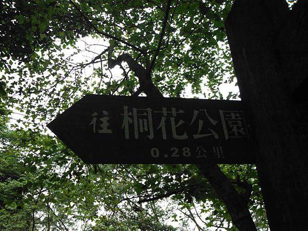 天上山賞桐巧遇五色鳥、早安登山 045
