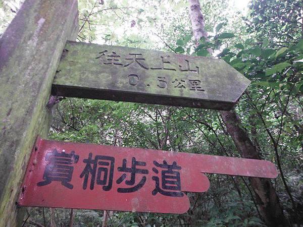 天上山賞桐巧遇五色鳥、早安登山 052