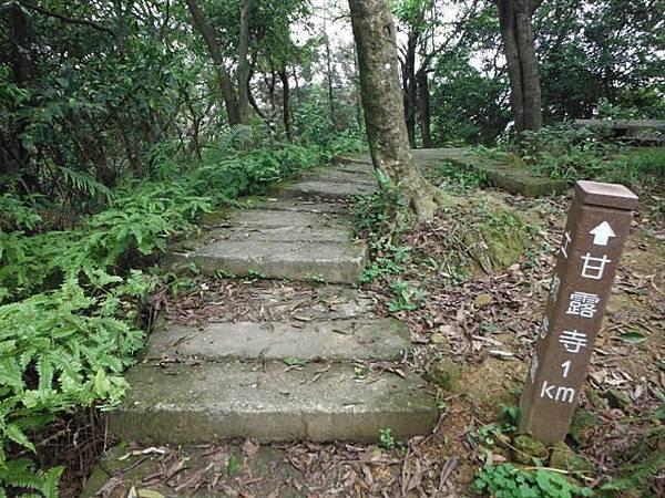 天上山賞桐巧遇五色鳥、早安登山 053