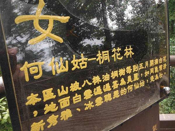景美山賞桐花.指南宮動物園山 071