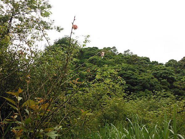 東四崁水山.四崁水山.文大華林植物園.高麗坑山.新高麗坑山 036