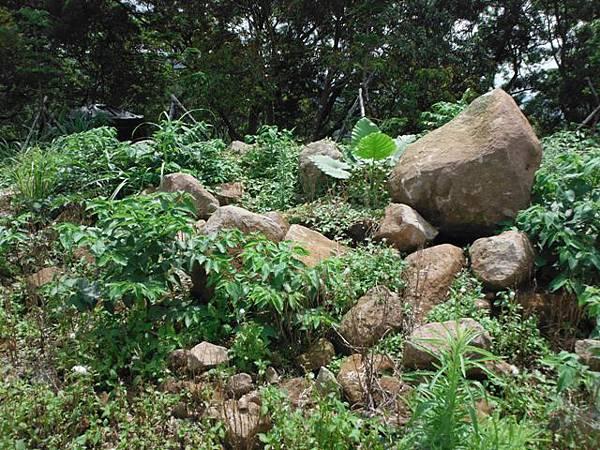 仰德大道登下竹林山 072