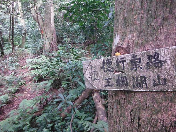 仰德大道登下竹林山 095
