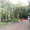 植物園穗花棋盤腳樹 033