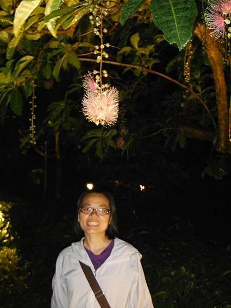 植物園穗花棋盤腳樹 077