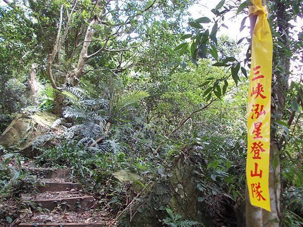 三峽蟾蜍山(畚箕湖山) 029