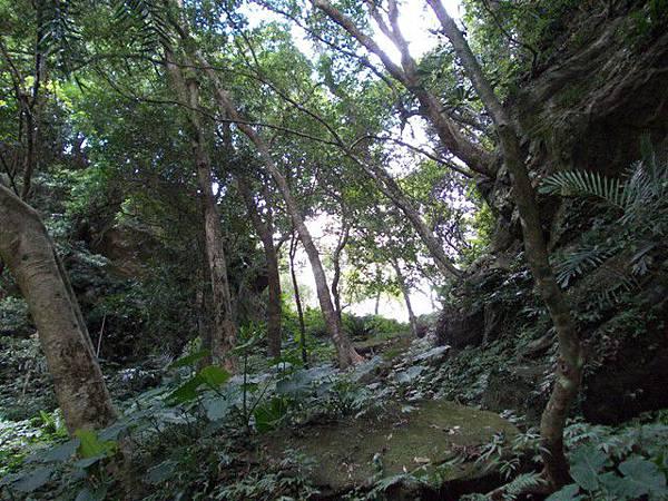 三峽蟾蜍山(畚箕湖山) 037