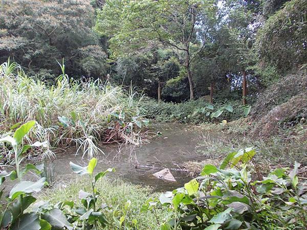 三峽蟾蜍山(畚箕湖山) 065