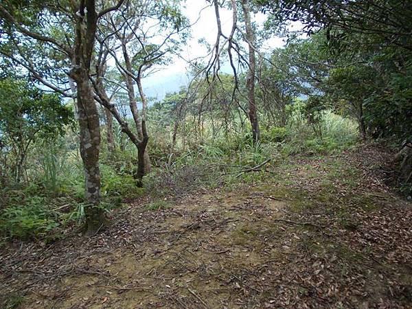 三峽蟾蜍山(畚箕湖山) 075
