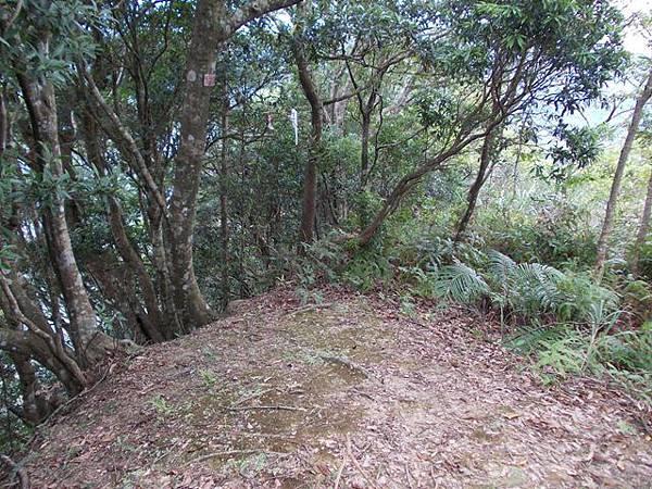 三峽蟾蜍山(畚箕湖山) 076