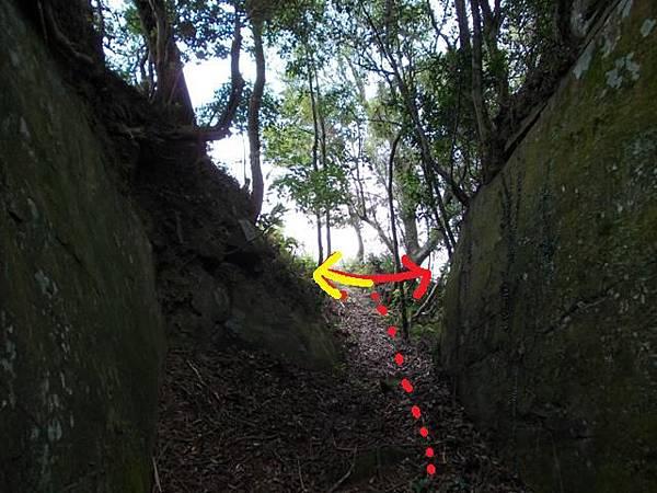 三峽蟾蜍山(畚箕湖山) 080