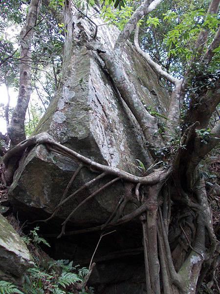 三峽蟾蜍山(畚箕湖山) 081