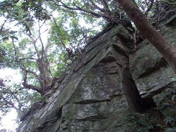 三峽蟾蜍山(畚箕湖山) 087