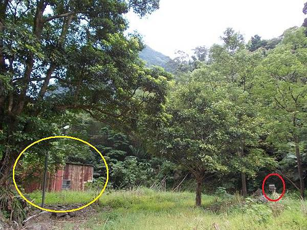 三峽蟾蜍山(畚箕湖山) 091
