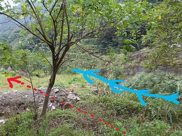 三峽蟾蜍山(畚箕湖山) 092