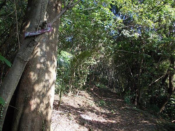 山豬窟山水綠生態公園.山豬窟尖西北峰 054