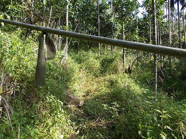 山豬窟山水綠生態公園.山豬窟尖西北峰 056