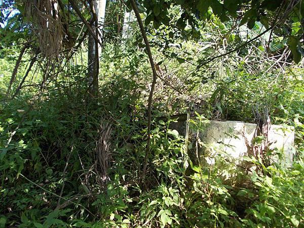 山豬窟山水綠生態公園.山豬窟尖西北峰 057