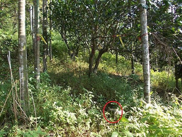 山豬窟山水綠生態公園.山豬窟尖西北峰 059