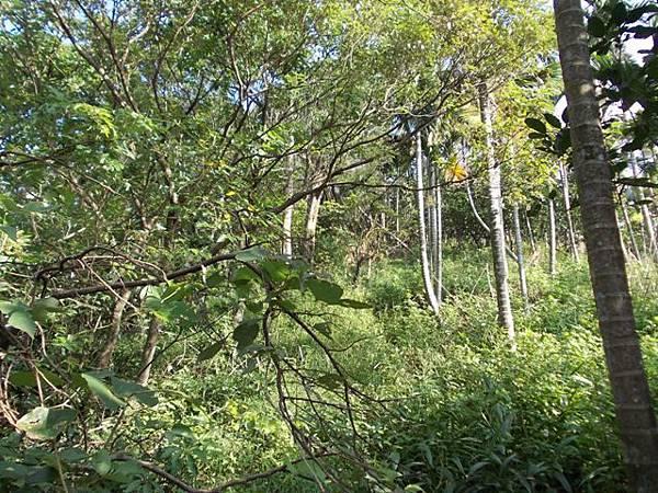 山豬窟山水綠生態公園.山豬窟尖西北峰 067