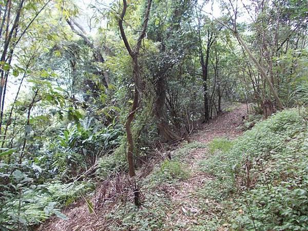 山豬窟山水綠生態公園.山豬窟尖西北峰 089