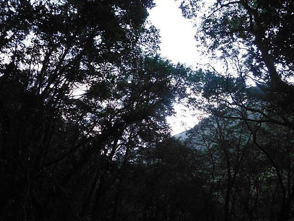 滿月元國家森林遊樂區.滿月圓山 055