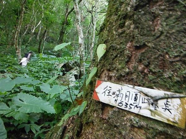滿月元國家森林遊樂區.滿月圓山 084