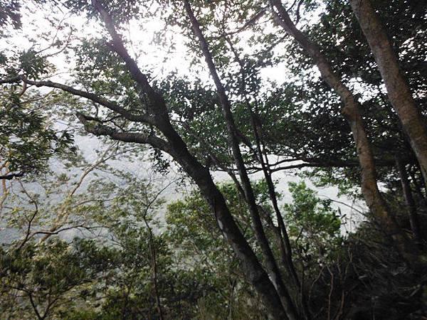 滿月元國家森林遊樂區.滿月圓山 097